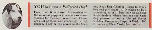 YOU can Pedigreed Dog!
